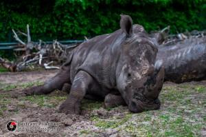 31.05.2015 / Hodenhagen / Serengetipark